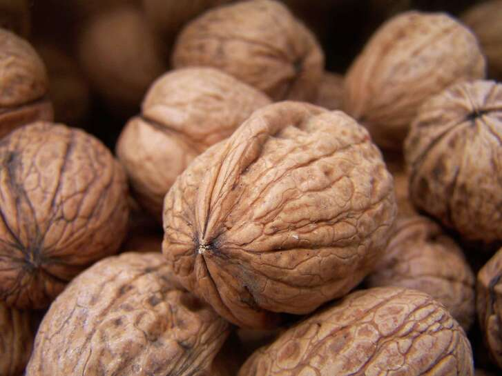 Walnuts in the shell. Nuts.