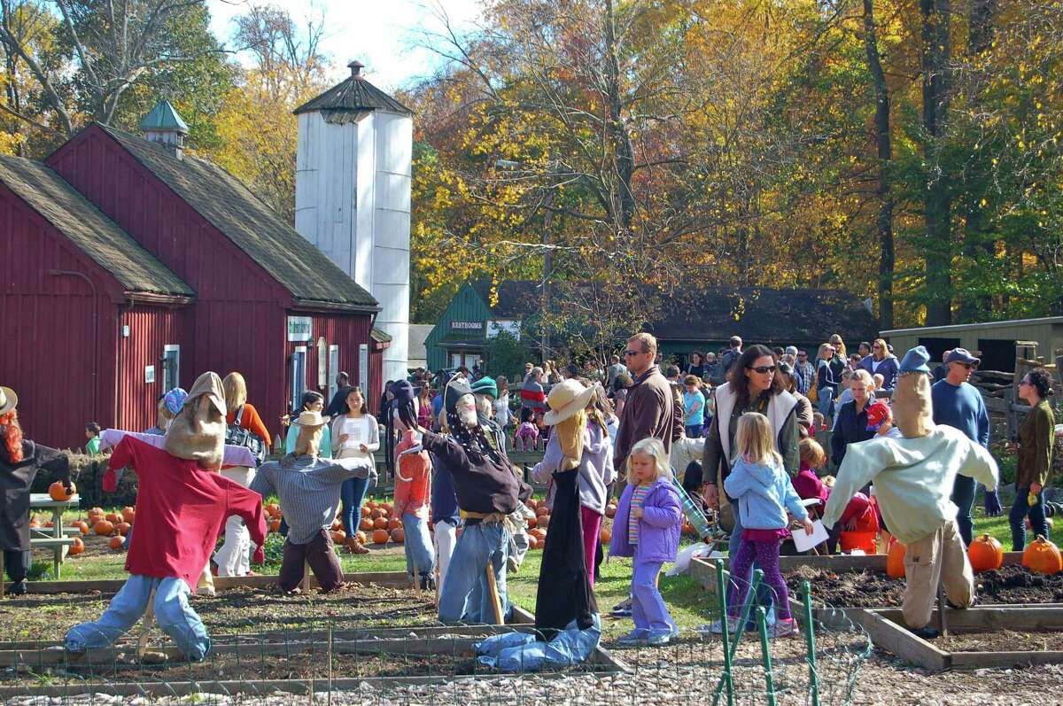 Scarecrow festivals are a New England fall tradition, like those at the Stamford Museum & Nature Center, above, and at the Bush-Holley Historic Site in Greenwich.