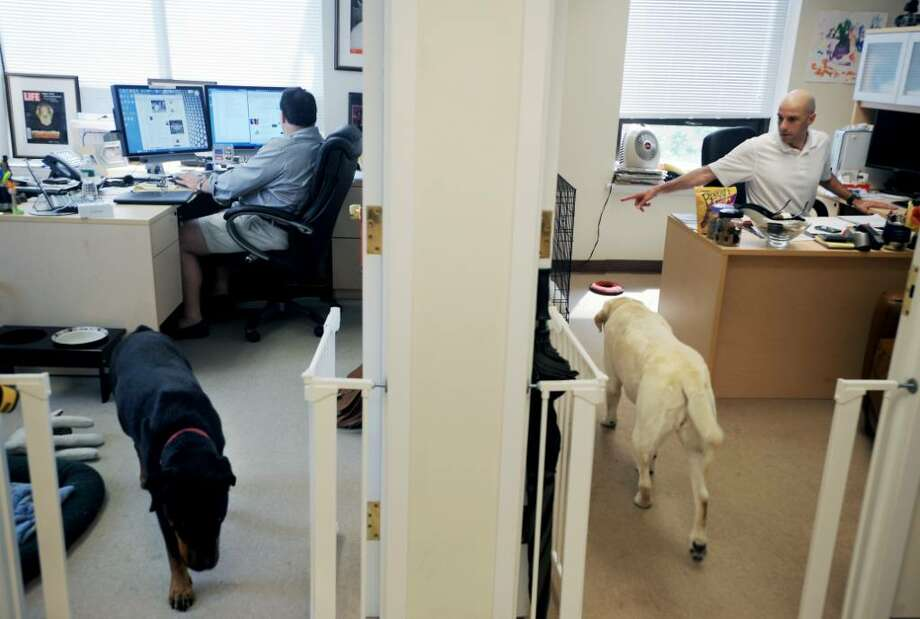 Chris Procopis and Michael Levien, Partners in LexPRO Research, share their offices with their three dogs Crystal, a greyhound, Carly, a yellow lab, and Joya, a rottweiler,  in Stamford, Conn. on Thursday June 24, 2010. Photo: Kathleen O'Rourke / Stamford Advocate