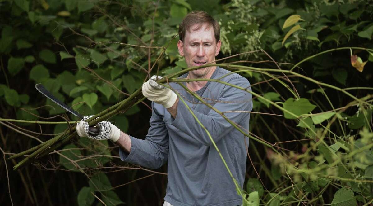 Reid Smith, of Darien, works on the Norwalk River Valley Trail clearing debris and invasive plants on Saturday morning. September 30, 2017, in Ridgefield, Conn. The event was part of National Public Lands Day.
