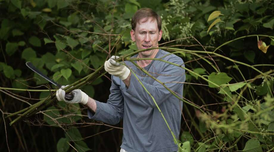 Reid Smith, of Darien, works on the Norwalk River Valley Trail clearing debris and invasive plants on Saturday morning. September 30, 2017, in Ridgefield, Conn. The event was part of National Public Lands Day. Photo: H John Voorhees III / Hearst Connecticut Media / The News-Times