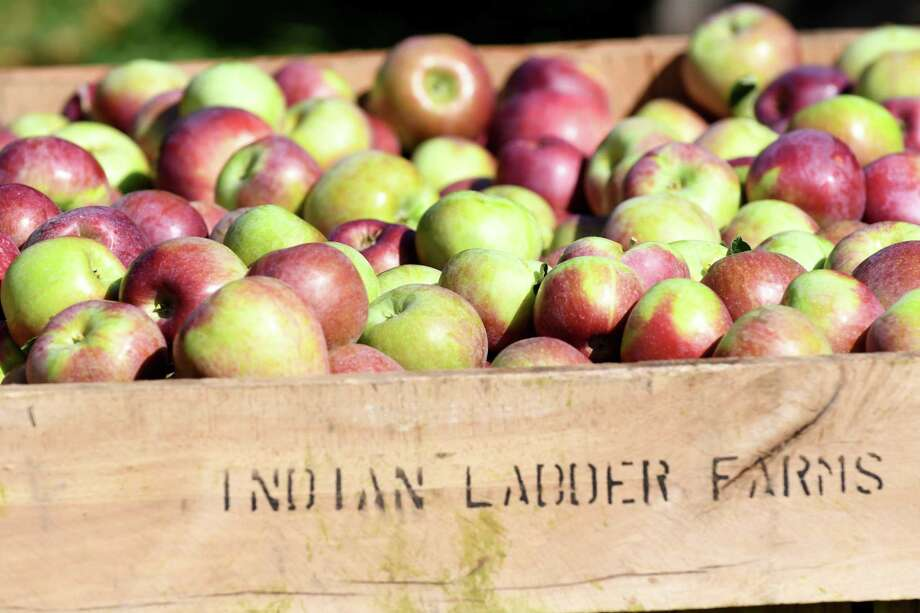 Cortland apples are collected in a hopper at India Ladder Farms on Thursday, Sept. 28, 2017, in Altamont, N.Y. (Will Waldron/Times Union) Photo: Will Waldron / 40041702A