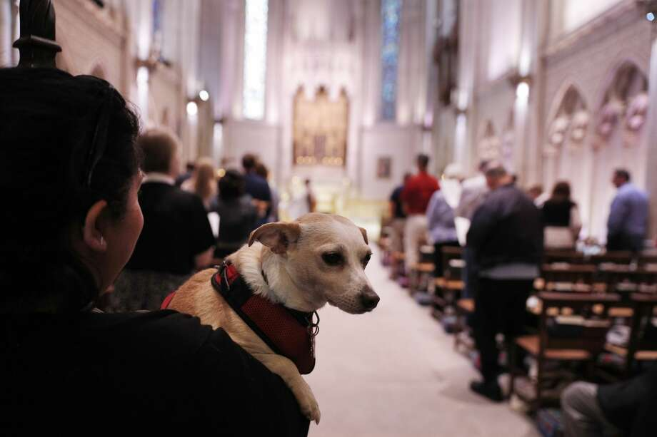 Leftie and her owner Monica Ovalle of San Bruno wait during a service of the Blessing of the Animals at Grace Cathedral in San Francisco, Calif., on Sunday, October 1, 2017. Photo: Carlos Avila Gonzalez/The Chronicle