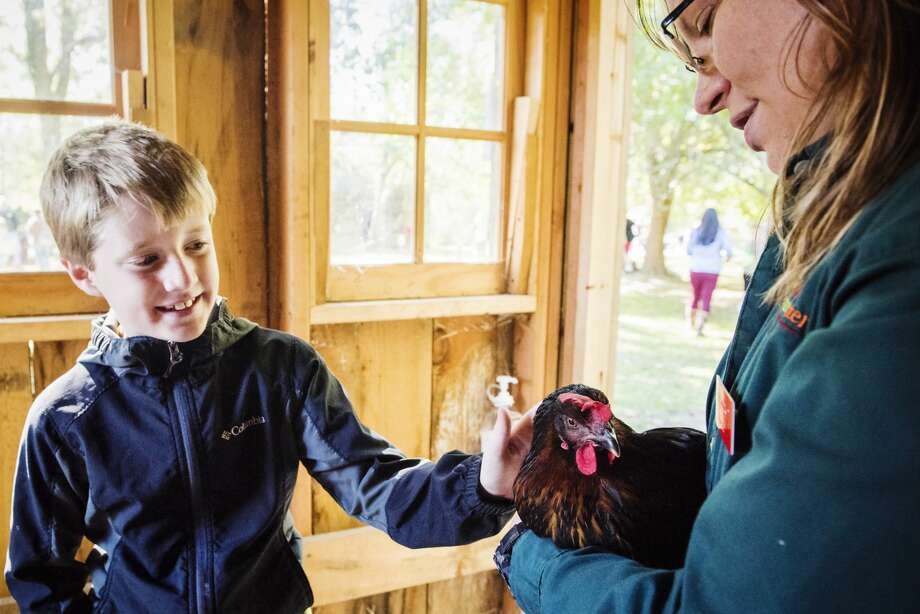 "Matthew Aulds, 8, of Freeland pets a hen held by educator Kris Goodwin during the annual Fall Harvest Festival at the Chippewa Nature Center on Saturday. ""They love it out here. This is a great place."" said Matthew's mother, Kim Aulds.  Matthew and his brothers Nathan and Caleb went to summer camp at the Chippewa Nature Center this past summer, Aulds said. (Danielle McGrew Tenbusch/for the Daily News) Photo: (Danielle McGrew Tenbusch/for The Daily News)"