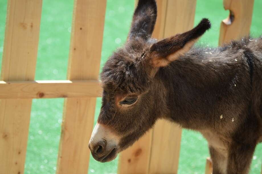 Baby donkey Photo: NurPhoto/NurPhoto Via Getty Images