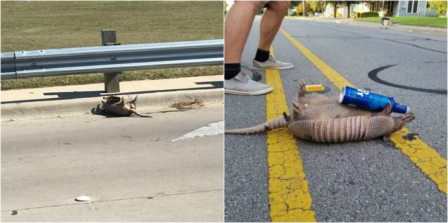 America's sick obsession with dead armadillos clutching beer bottles has no end. Photo: Reddit