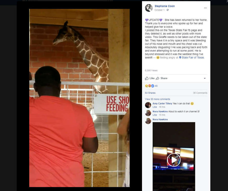 Stephanie Coon of Fort Worth captured footage of a giraffe acting strangely during the State Fair of Texas on Oct. 1, 2017.Image source: Facebook Photo: Stephanie Coon Via Facebook