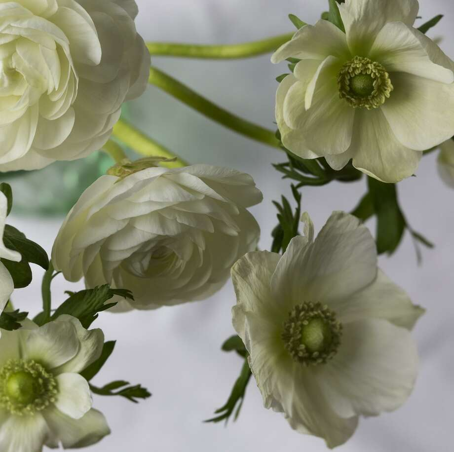 White Ranunculus Archival Pigmented Photographic Print with Encaustic, Marcy Juran Photo: Contributed Photo / Not For Resale