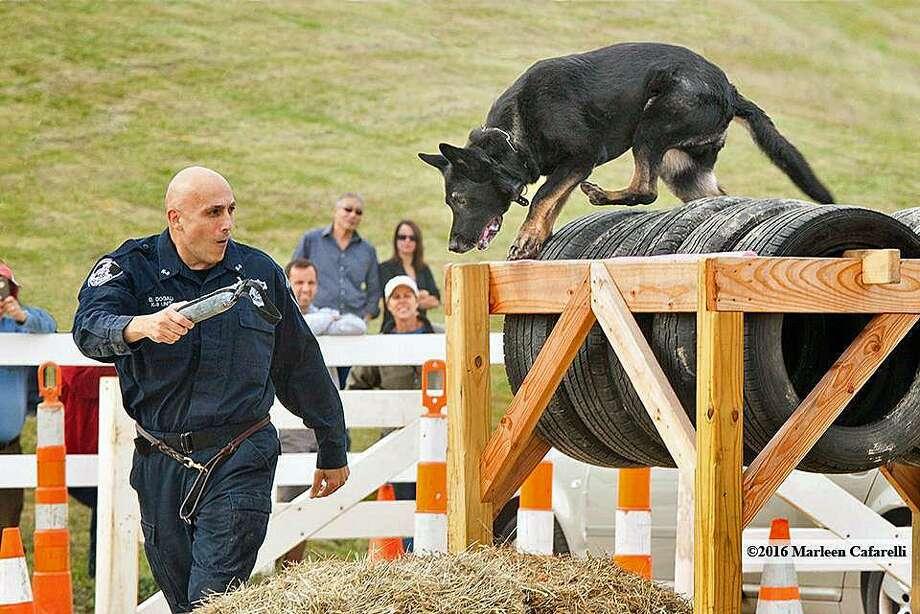 Western CT Police K-9 Challenge Photo: / Marlene Cafarelli