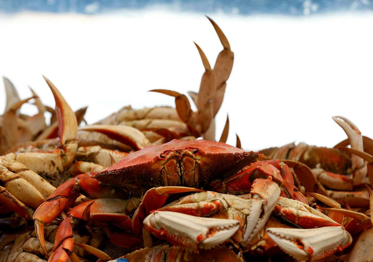 Fresh Dungeness crab from Washington state is ready to crack and serve at Tarantino's restaurant at Fisherman's Wharf in San Francisco, Calif. on Wednesday, July 5, 2017. Data indicates the most recent local crab season was the most profitable for fishermen and retailers.