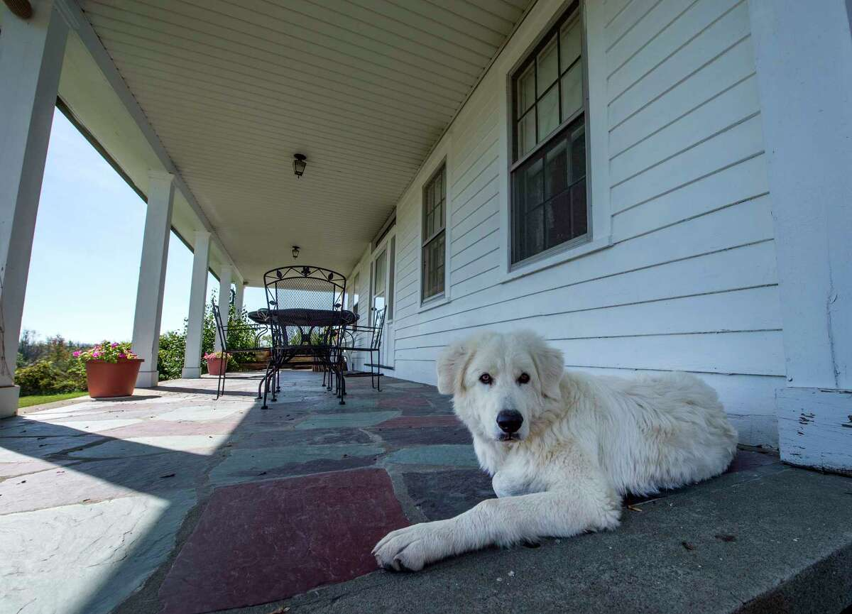 Farm dog Tecumseh relaxes on the rear porch of one of the residences at the Wm. H. Buckley Farm Wednesday Oct. 4, 2017 in Ballston Spa, N.Y. (Skip Dickstein/Times Union)