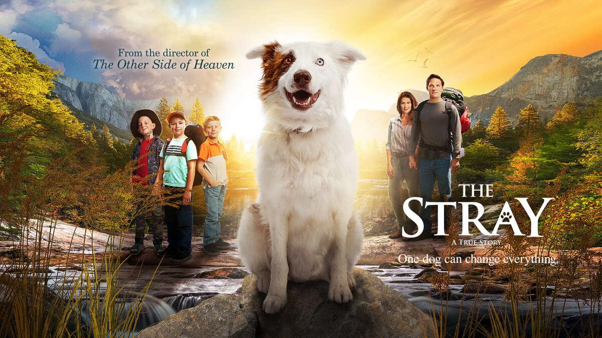 'The Stray' releases Friday via The Stray Movie