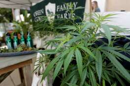 """Marijuana plants are displayed at the Green Goat Family Farms stand at """"The State of Cannabis,"""" a California industry group meeting in Long Beach, Calif., on Thursday, Sept. 28, 2017. California's emerging marijuana industry is being rattled by an array of unknowns, as the state races to issue its first licenses to grow and sell legal recreational pot on Jan. 1. Proposition 64, which legalized recreational pot use for adults, takes effect next year. (AP Photo/Damian Dovarganes)"""
