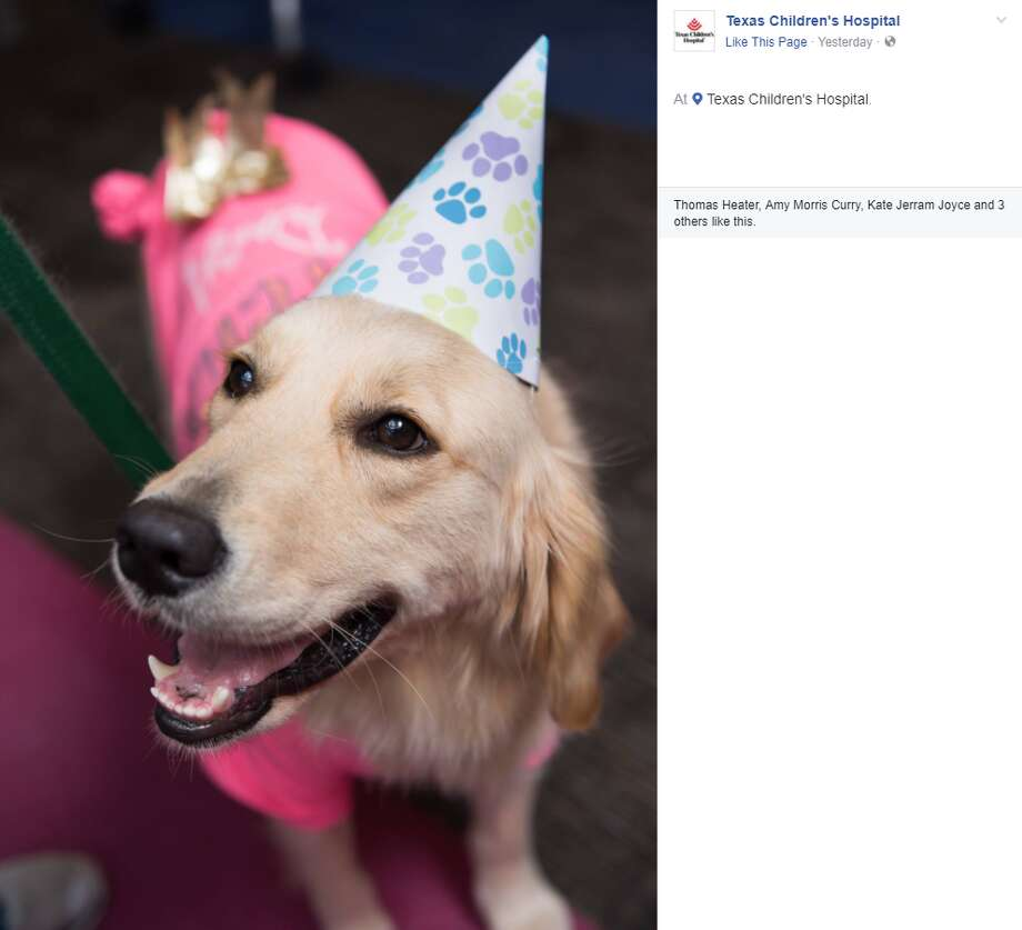 Elsa celebrates her one-year anniversary of workingwith patients, family and staffat Texas Children's Hospital. Photo: Texas Children's Hospital Via Facebook