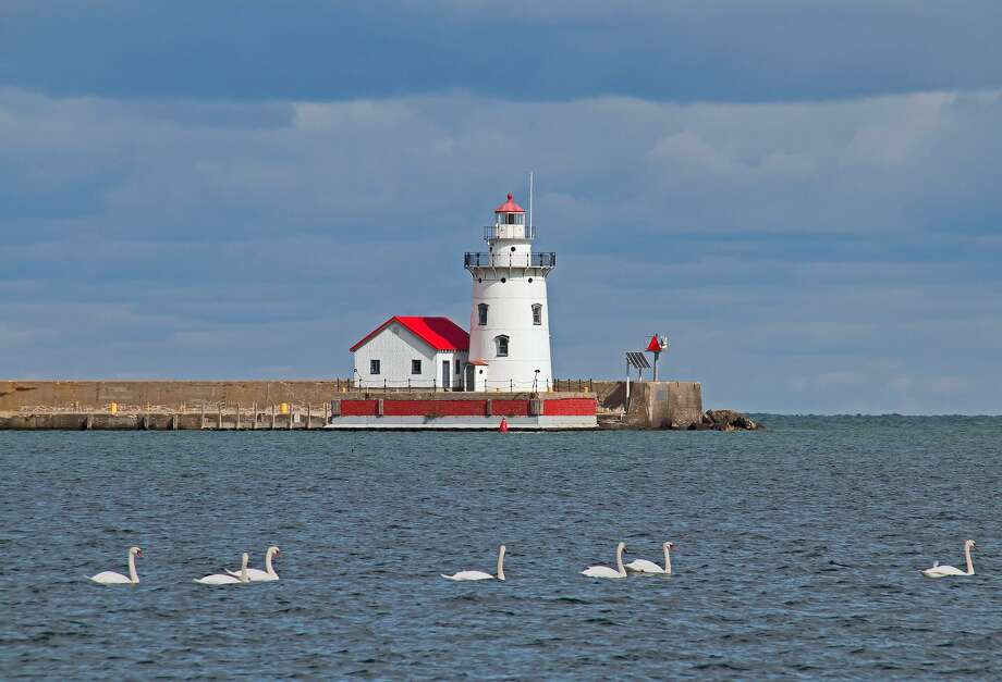 Swans swim peacefully in front of the Harbor Beach Lighthouse. Photo: Bill Diller/For The Tribune