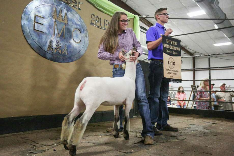 Splendora FFA's Allison Jones shows her grand champion lamb during the East Montgomery County Fair Auction on Saturday, Sept. 16, 2017, at A.V. 'Bull' Sallas Park in New Caney. Photo: Michael Minasi, Staff Photographer / © 2017 Houston Chronicle