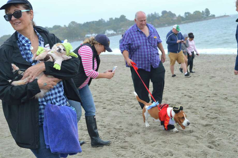 Alexa Mullady of Fairfield, left, and her dog, Bear, take part in the Walk with Harold and Friends dog walk and fun fest at Jennings Beach, Sunday, Oct. 8, 2017, in Fairfield, Conn. Photo: Jarret Liotta / For Hearst Connecticut Media / Fairfield Citizen News Freelance