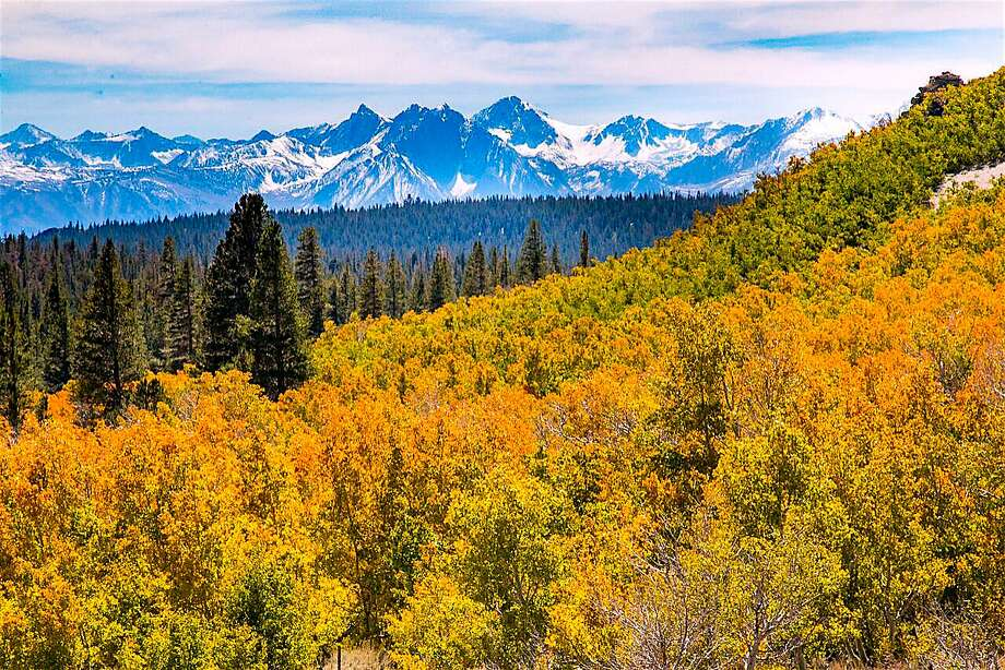 The fall color scene, projected to reach peak color in the third week of October, here looking across Sagehen Summit and the Sierra Crest. Photo: Tom Stienstra, Jeff Simpson / CaliforniaFallColor.com