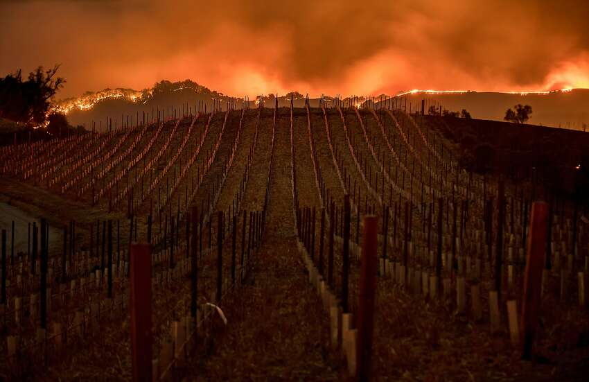 Flames burn along a ridge behind a Partrick Road vineyard in Napa on Oct. 9.