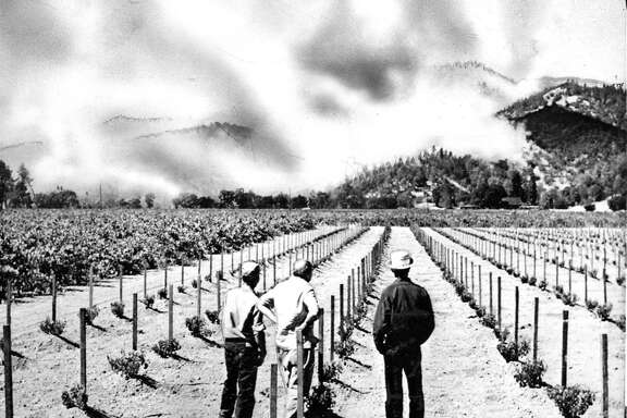 The Hanly fire September 1964 Vineyard workers, watch the brushfire in the foothills above the winery near Calistoga. Associated Press photo, ran 09/23/1964, p. 1