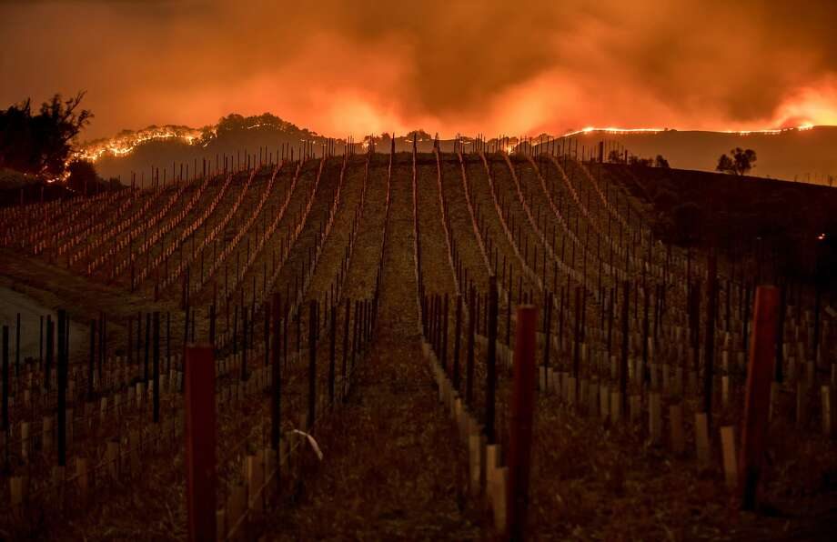 Flames burn along a ridge top behind a Partrick Rd. vineyard in Napa, Calif., on Monday, Oct. 9, 2017. Photo: Noah Berger/Special To The Chronicle