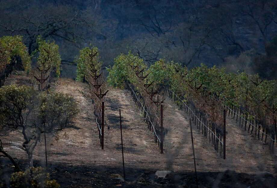 Partially destroyed vines are visible off Soda Canyon Road Oct. 9, 2017 in Napa, Calif. A fire tore through the area on the evening of Oct. 8, destroying properties and vineyards. Photo: Leah Millis, The Chronicle