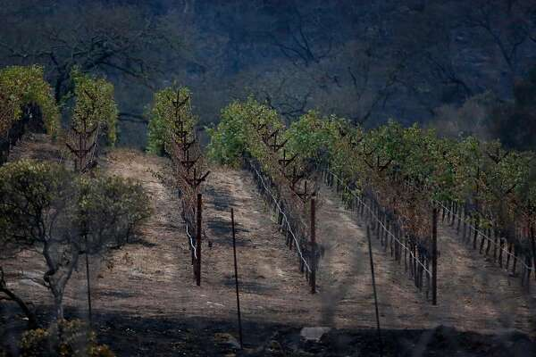 Partially destroyed vines are visible off Soda Canyon Road Oct. 9, 2017 in Napa, Calif. A fire tore through the area on the evening of Oct. 8, destroying properties and vineyards.