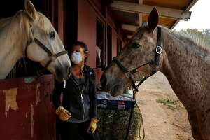Erica Tom, the Director of Arts and Education with Belos Cavalos and the Trauma-informed Equine Experimental Education Program allows longtime horse friends Secreto, left, and Amtec, right, greet each other to try to keep them calm while taking care of them in the stables at the Santa Rosa Fairgrounds Oct. 10, 2017 in Santa Rosa, Calif. The horses were evacuated from Kenwood. The stables were being used as a place for owners to house their evacuated large animals.