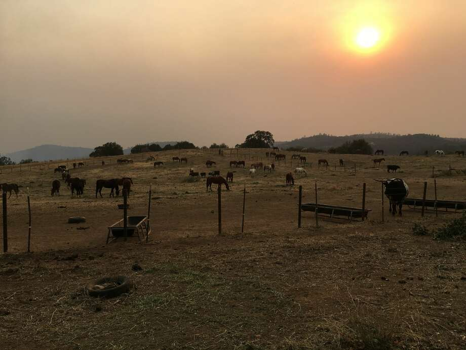Horses at the Equine Rescue Center in Bangor are kept in an enclosure away from the fires, as owner Monica Hardeman closely monitors the spreading Cascade Fire, near the property. Photo: Courtesy Monica Hardeman