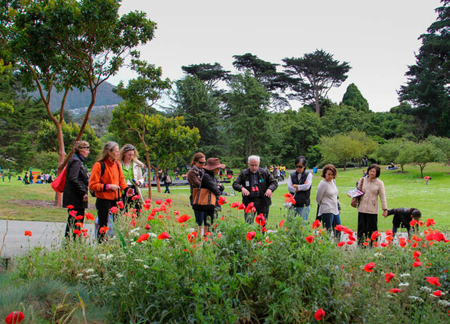 The San Francisco Botanical Garden, A Living Museum Within Golden Gate  Park, Offers 55 Acres Of Both Landscaped Gardens And Open Spaces, Showcases  Over ...