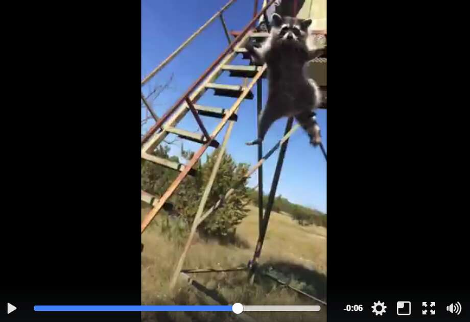 """A new video out of San Marcos is proving to be a hilarious cautionary tale as to why you should """"always check blinds before"""" the hunting season starts back up again."""