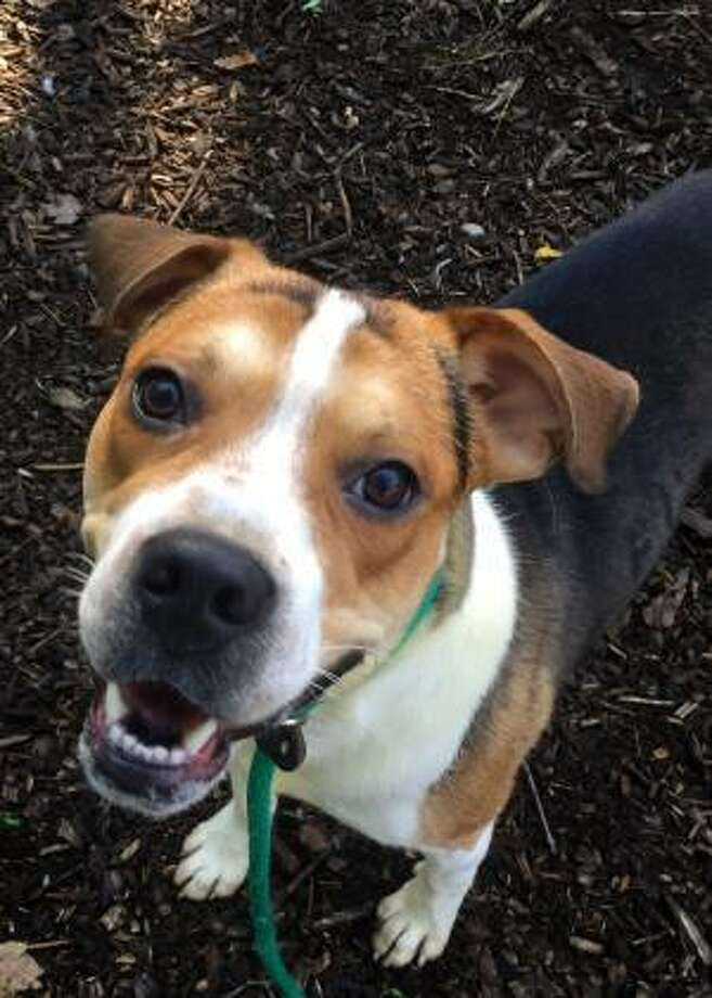 Denzel is waiting for a new home of his own. Photo: Contributed Photo / Not For Resale