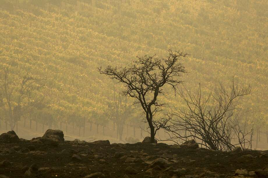 Winds expected overnight Wednesday and Thursday will not help firefighters battling the Wine Country fires. A vineyard on Napa's Silverado Trail is seen next to land blackened by the Atlas Fire on October 11, 2017 near Napa, Calif. (Photo by David McNew/Getty Images) Photo: David McNew, Getty Images