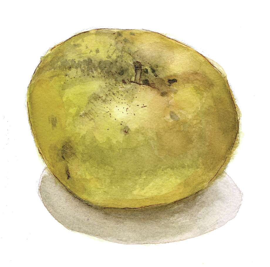 Golden Russet (Illustration by Tyswan Stewart / Times Union)