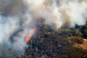 Massive flames from the Tubbs Fire consumes thick grasses and tall trees near Santa Rosa, Calif. on Wednesday Oct. 11, 2017.