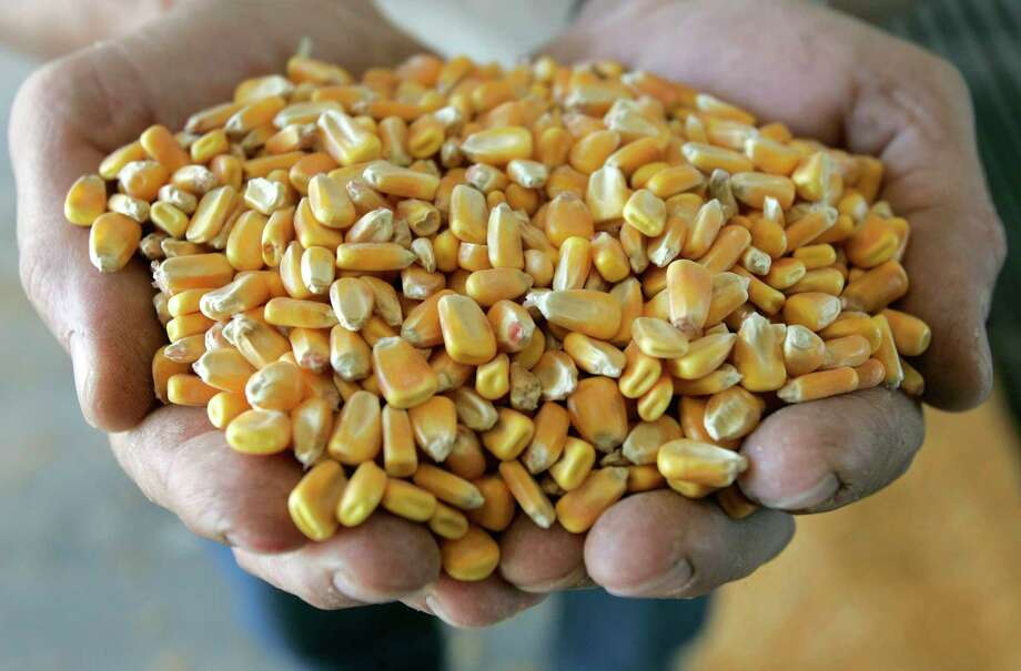 "In this May 24, 2006 file photo, a handful of corn is shown before it is processed at the Tall Corn Ethanol plant in Coon Rapids, Iowa. A reader-submitted question about crops used for biofuel is being answered as part of an Associated Press Q&A column called ""Ask AP."" (AP Photo/Charlie Neibergall, File) Photo: CHARLIE NEIBERGALL, STF / AP"