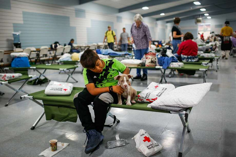 Evacuee Junior Gomez, 11, sits with his puppy Smoky, 2 months at a Red Cross shelter after evacuating his home with his parents following the Tubbs fire in Santa Rosa, Calif., on Monday, Oct. 9, 2017. Photo: Gabrielle Lurie, The Chronicle