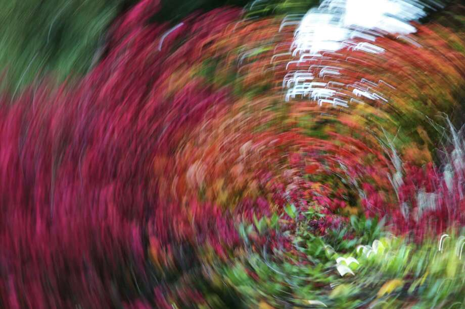 Abstract long exposures of fall colors at Kubota Gardens, Wednesday, Oct. 11, 2017. Photo: GENNA MARTIN, SEATTLEPI / SEATTLEPI.COM