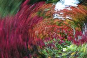 Abstract long exposures of fall colors at Kubota Gardens, Wednesday, Oct. 11, 2017.