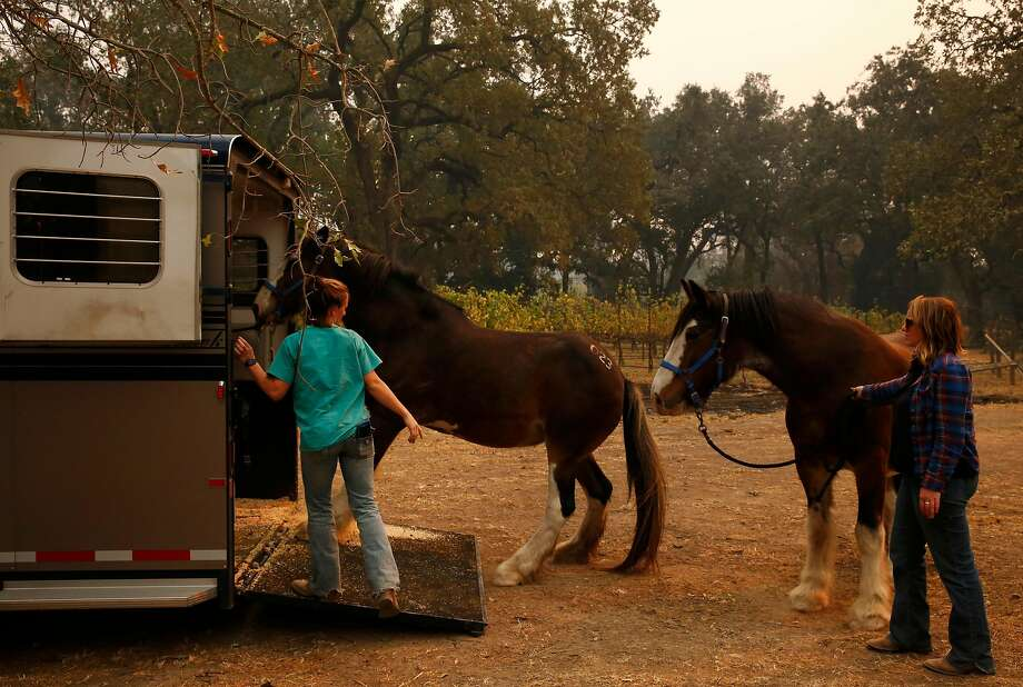 Dr. Emily Putt, left, and Lena Gardner load stubborn horses into a trailer at a ranch that needed to evacuate 10 horses Oct. 11, 2017 in Glenn Ellen, Calif. Putt has been working with her friends since Monday, when the fires broke out, to rescue animals that are being threatened by the fires. Photo: Leah Millis, The Chronicle
