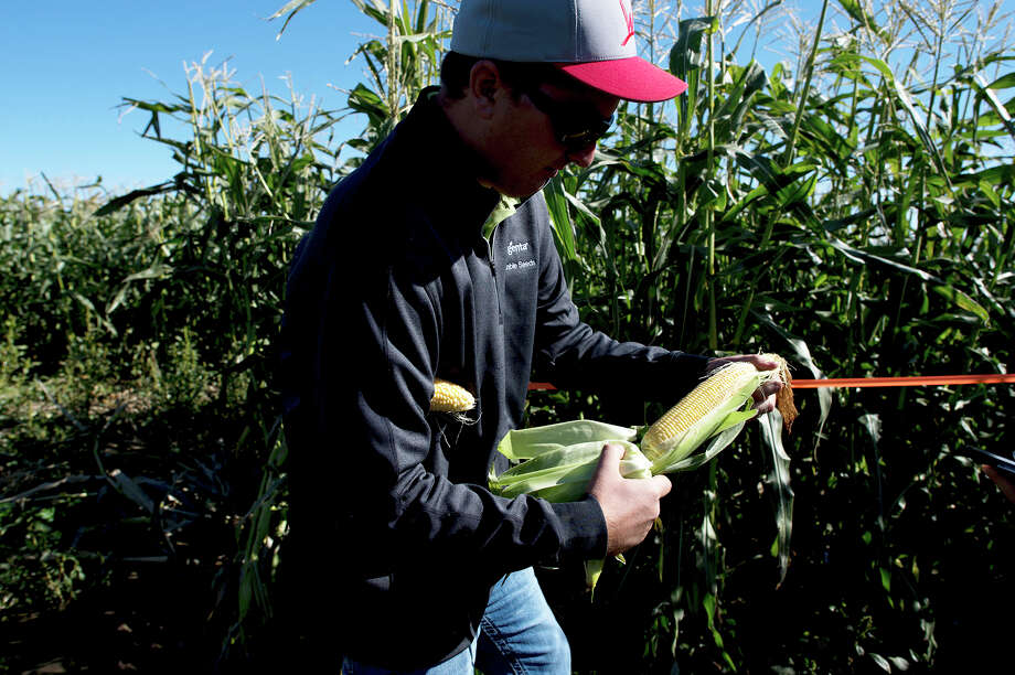 Kevin Moe checks corn near Pasco, Wash. For producers, food costs were flat last month. Photo: Tyler Tjomsland, MBO / The Spokesman-Review