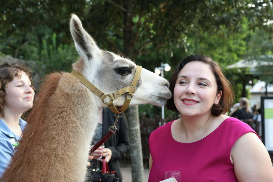 The Wildcatter Saloon off I-10 in Katy is hosting three upcoming all-you-can-eat crawfish events featuring alpacas, llamas and pygmy goats. (File photo) Photo: Yi-Chin Lee, Houston Chronicle / © 2017  Houston Chronicle