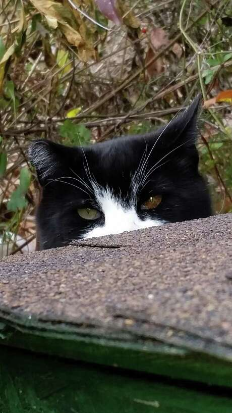 When some people see stray cats, they get angry at the cats as well as the caretakers who take care of them. Photo: Courtesy Photo
