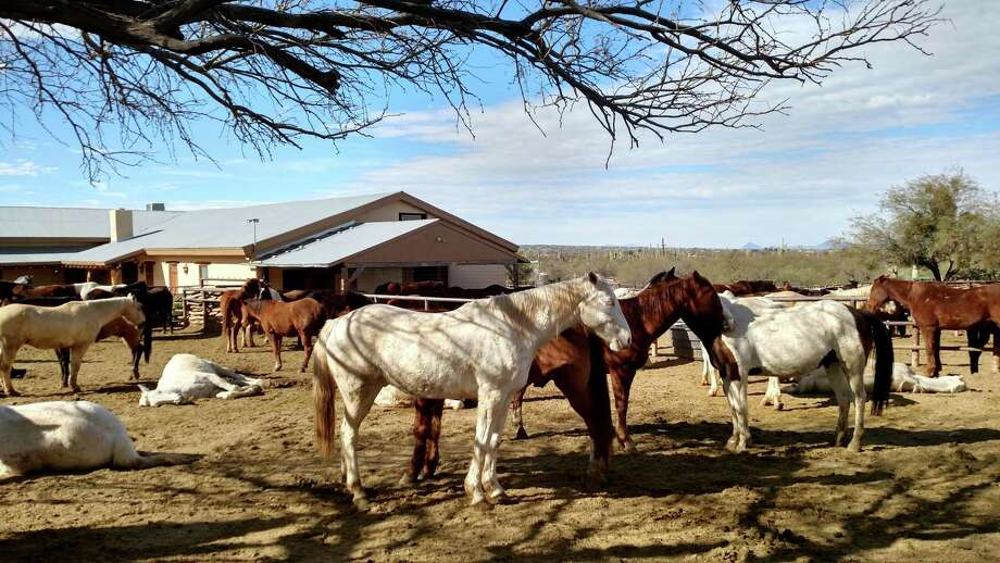 Horses await their assignments at the Tanque Verde. The dude ranch is known for its outstanding horse program. MUST CREDIT: Photo by Aviva Goldfarb for The Washington Post / For The Washington Post