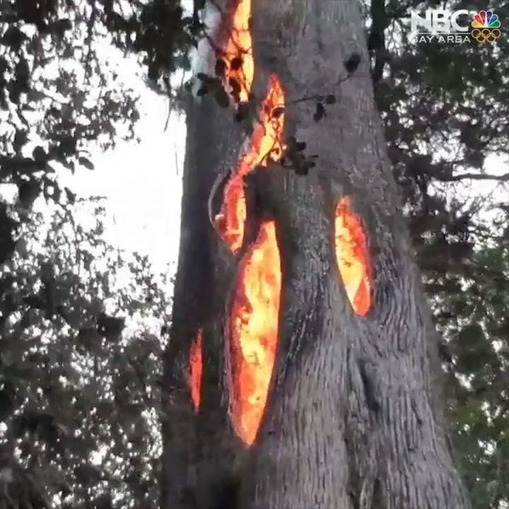 Sf Chronicle Classifieds: Watch: Sonoma Man Finds Fire Burning INSIDE Tree
