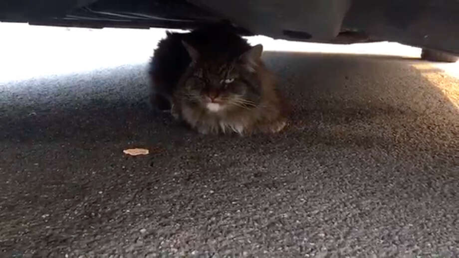 A Sonoma County Sheriff's deputy rescues a cat during the Tubbs Fire response in this video which was posted to the Sonoma County Sheriff's YouTube page on October 13, 2017. Photo: SCSO