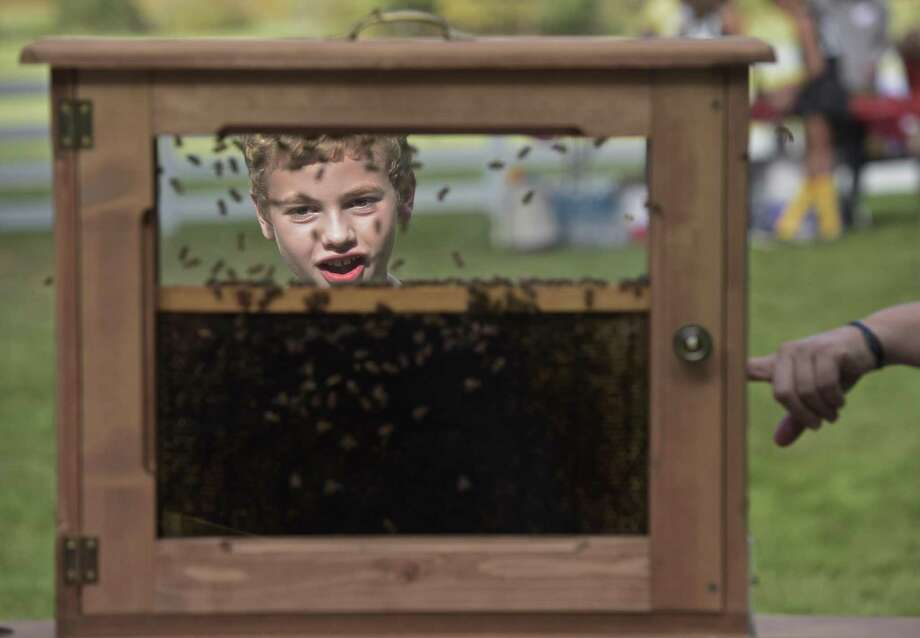 Logan Santisi, 9, a bee keeper from Wilton, looks at honey bees from the hives of New Pond Farm in an educational display case. The farm was having their Annual Harvest Festival on Saturday afternoon, October 14, 2017, in Redding, Conn. Photo: H John Voorhees III / Hearst Connecticut Media / The News-Times
