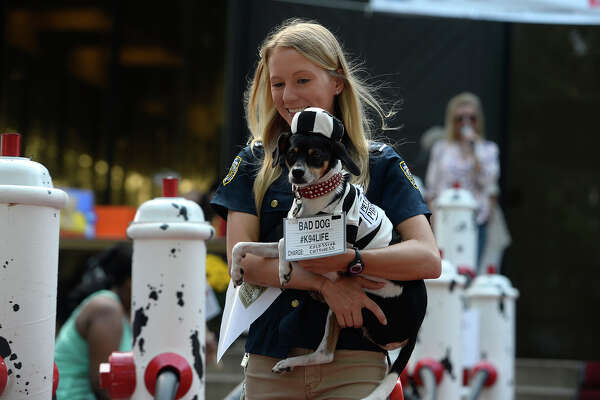 Shelby Giberson and her dog, Harlow, participate in a costume contest during Dogtoberfest in downtown Beaumont on Saturday.  Photo taken Saturday 10/14/17 Ryan Pelham/The Enterprise