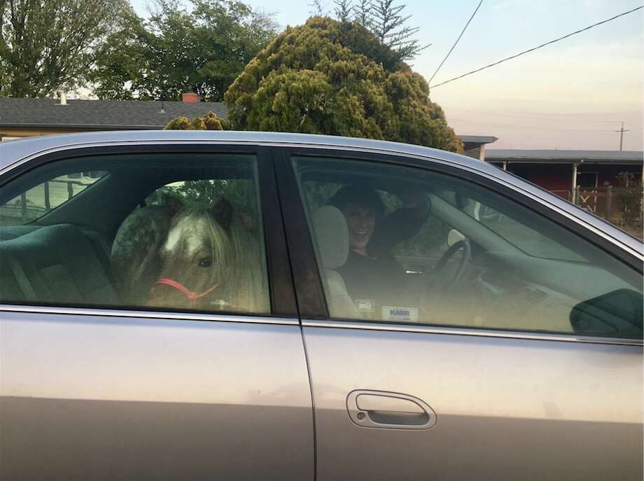 Stardust had to be evacuated in the backseat of his owner's Honda Accord. Photo: Lisette Hall Frye