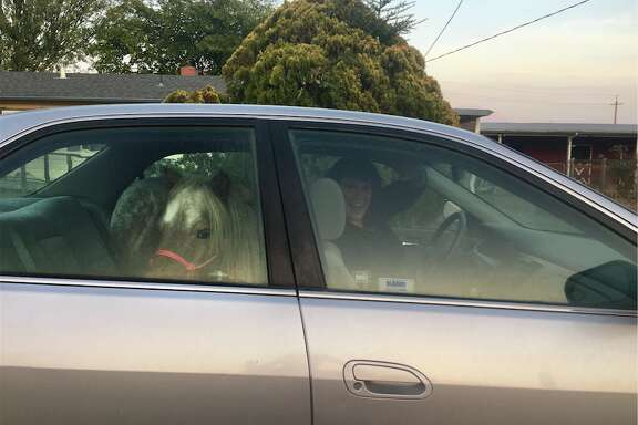 Stardust had to be evacuated in the backseat of his owner's Honda Accord.